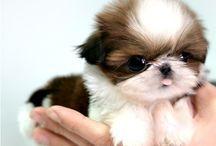 los perritos más bonitos maura