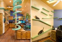 Cats hause