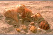 sea-ocean ideas / by Pam Fansler