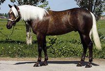 Chocolate Palomino Quarter Horse