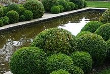 Creative Shrubbery / by LAWN-N-ORDER