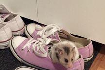 Mein kleiner Hamster / Hamster