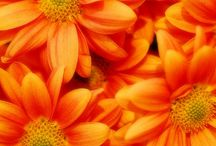color - ORANGE crush / Such a cheerful, energizing color! / by Bonnie Short