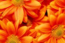 ღ.¸¸.✿❤Naranja - Orange / by Elisabeth  ღ.¸¸.✿❤