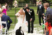 THE Wedding PETS