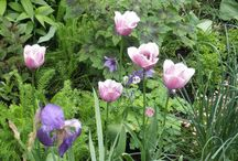 bloemen / mooie combinatie