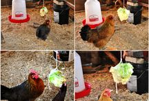 Chickens!!! / by Kristen Rogers