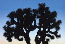 Cali Trip II / by Crit Gordon