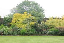 perennial shrub borders