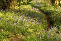 Birnieknowes Woodland / Ideas for woodland garden