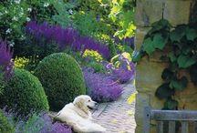 Ogrody / Strzyżone krzewy