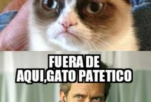 Memes Chachis