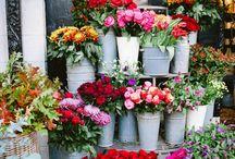 kvetinarstvo