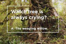 tree jokes / by tentree
