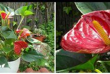 φυτα-λουλουδια