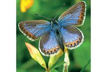 Plants and Butterflies / Books on plants and butterflies, available now from www.oldpond.com.