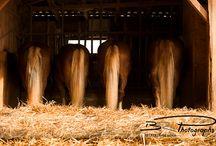 Horsey Bums