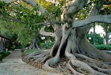PLACE-TREE-NATURE / by Aakash Gaikwad