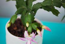 kwiaty - parapet