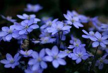 Нежный синий