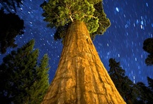 CA - Sequoia NP n Kings Canyon NP