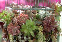 Soph's Succulents