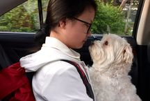 Jamie The Howling Maltese / #Maltese #dog who thinks he's a human.   #howlingmaltese #dogsarefamily