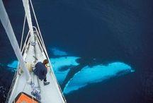 Saving the sea world!
