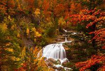  Fall  