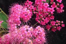 Цветы&цвета / Растения, цветы