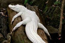 Animais Albinos