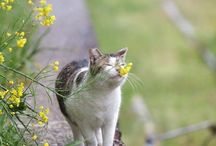 Cats in the Garden / Photography of Cats in the Garden / by ~ Terri ~