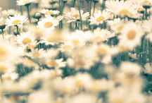 Spring / by Beth Harrell
