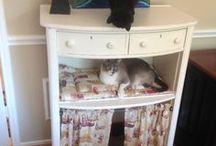 Repurposed Pet Furniture / by Jerald Locke