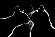Pets / by Marcia Hott