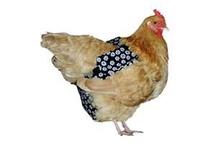 Chickens my love
