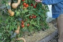 Sembrar vegetales