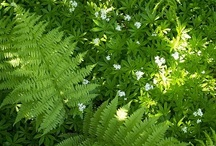 Växter jag vill ha!
