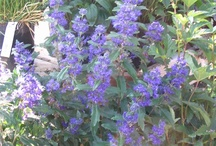 Perennials for the shade / Shade is one of my favorite places to garden. Lots of colorful plants that are generally much easier to maintain than plants in the hot sun. / by Viola Nursery and Greenhouse