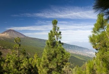 Tenerife / The 'Island of Eternal Spring' more than lives up to its title with sun warming the landscape year round, from the capital Santa Cruz to the mountainous Teide National Park and the lush Orotava Valley in the north. Our Greentraveller Guide to Tenerife will give you all the advice you'll need to make the most of a trip to the largest Canary island. Our guide selects some of the best places to stay, from traditional rural houses and rural hotels to luxurious modern hotels...