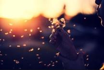 daisies, dandelions, & sunshine
