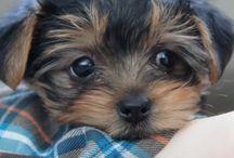 ~~Puppy~~ / Cute animals