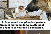 Belles citations/phrases