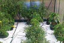 Autopot gardening
