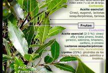 hierbas y especies efectos y uso