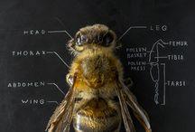 Bee&honey
