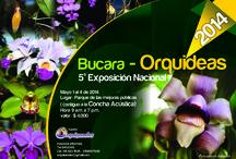 Orquideas de Santander