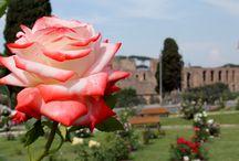 Roma'17