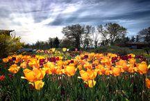Arthur's Garden / Photos taken in Arthur's Garden right here in beautiful PEI / by Veseys Seeds + Garden