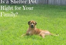 Choosing a pet / Need help on choosing a pet? Whether your considering a shelter dog, your first reptile, or a pet for a kid, this board is full of great tips
